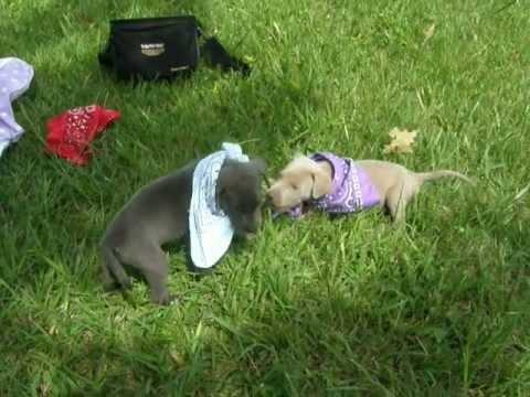 Adopt a dog, Puppy - Pet Rescue Virginia, Washington DC, Maryland, New Jersey, New York