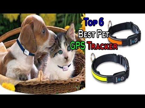 Pet Tracker    Pet GPS Tracker    Top 6 Best Pet GPS Tracker