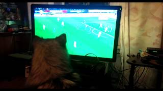 Собака смотрит футбол   Dog watching football