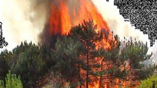 Лесные и степные пожары. ОБЖ  7 класс.
