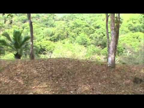 COSTA RICA REAL ESTATE SERVICE Spectacular Dominical Ocean View Estate Property