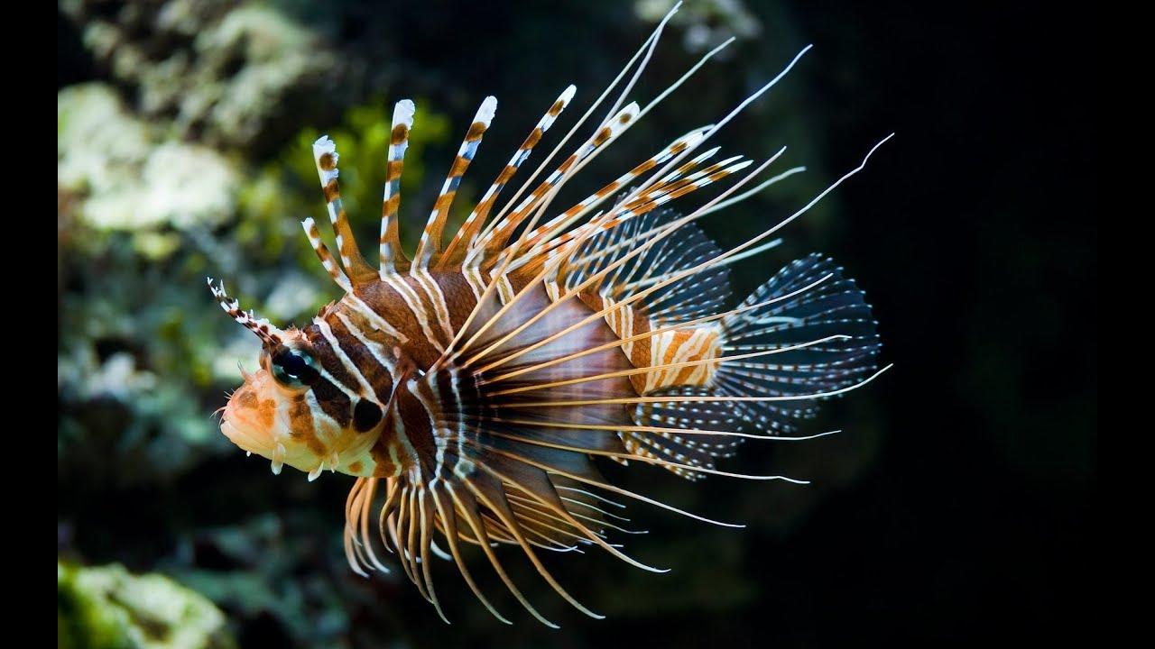 бабочка рыбка фото