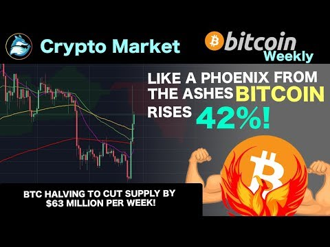Like a PHOENIX from the ashes! – BTC up 42%! ⎪Crypto Markets