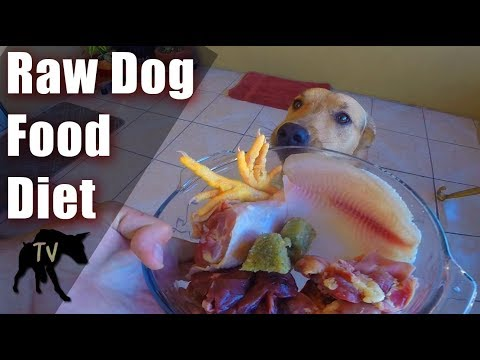 Raw Fed Baja Rescue Dog | Raw Feeding Vlog