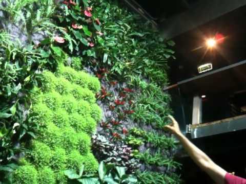 Il nostro muro verde vertical garden acquario di for Vivai genova