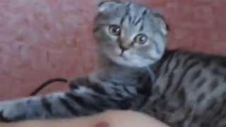 Волшебные коты !!! Приколы про котов !!!
