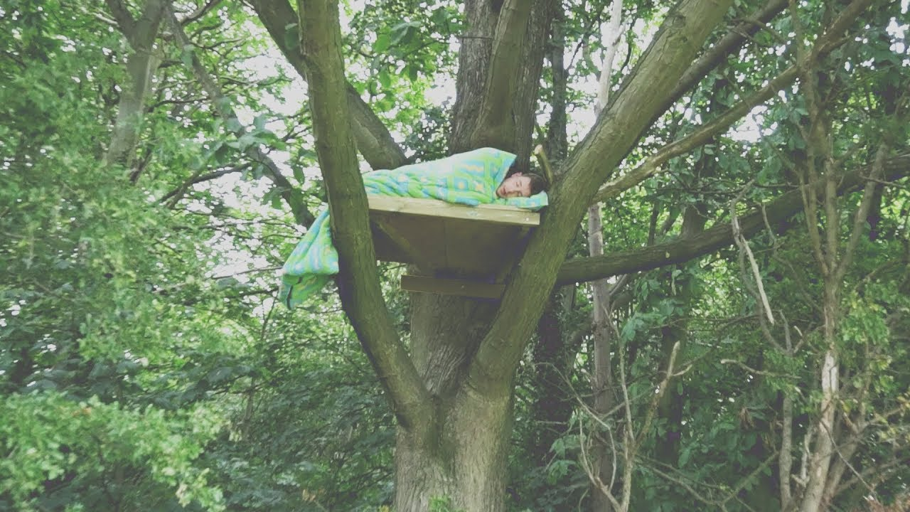 I Spent The Night In A Tree Amp It Was A Huge Mistake Sleep