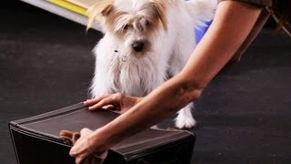 How To Teach A Dog To Open His Toy Box | Dog Tricks