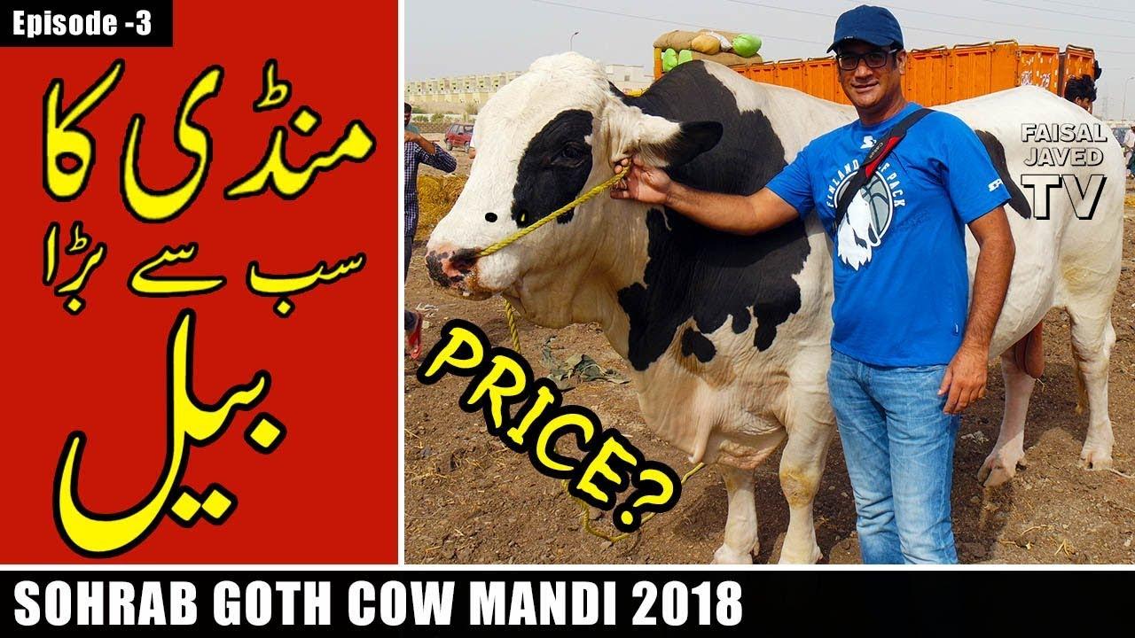 COW MANDI SOHRAB GOTH 2018 KARACHI | Episode – 3 | Video in URDU/HINDI