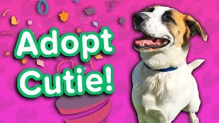 Adopt Cutie! // Shepherd Mix // Adoptable Featurette