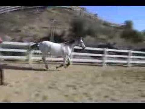 Carole Louvat and Comet Free lunge