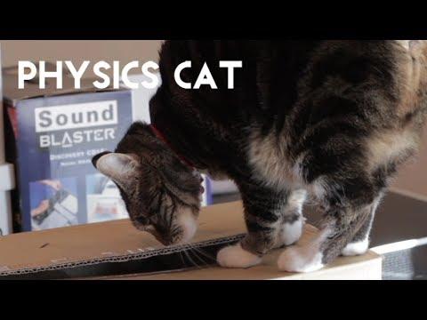 PHYSICS CAT: Hoaxes and Quantum Mechanics