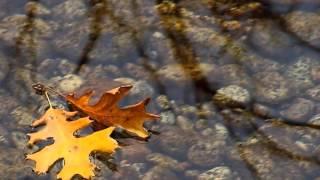 Улетели листья с тополей