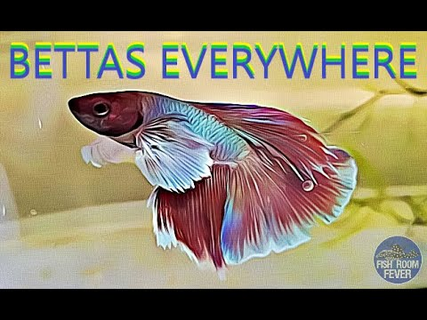 bettas-and-projects-everywhere
