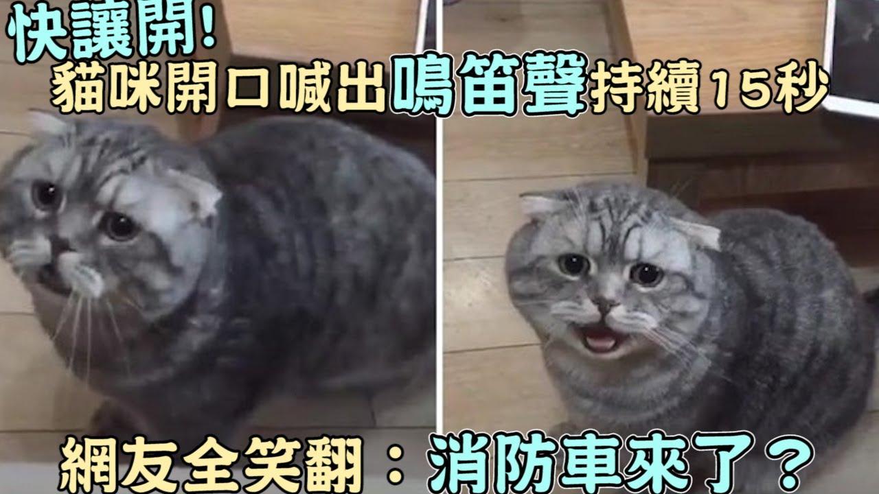 快讓開!貓咪開口喊出「鳴笛聲」持續15秒,網友全笑翻:消防車來了?