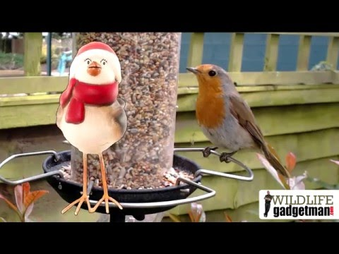 Wildlife Gadget Man - Jingle Cams 2015