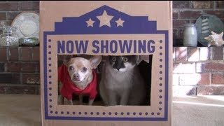 Cats in a Box (Dogs like boxes too!)
