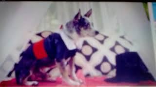 одни дома!взломали компьютер тети нашли удаленные видео тайная жизнь животных