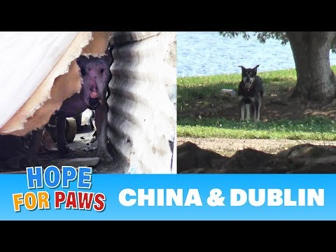 Abandoned dogs waited for someone to call Hope For Paws!