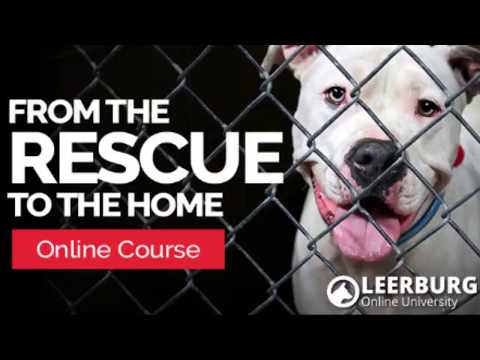 From the Rescue to the Home - Online Course Promo