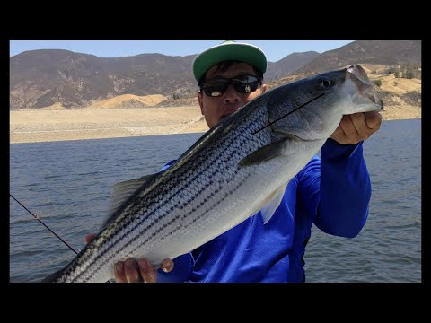STRIPED BASS FISHING AT LAKE CASTAIC, SOUHTERN CALIFORNIA!