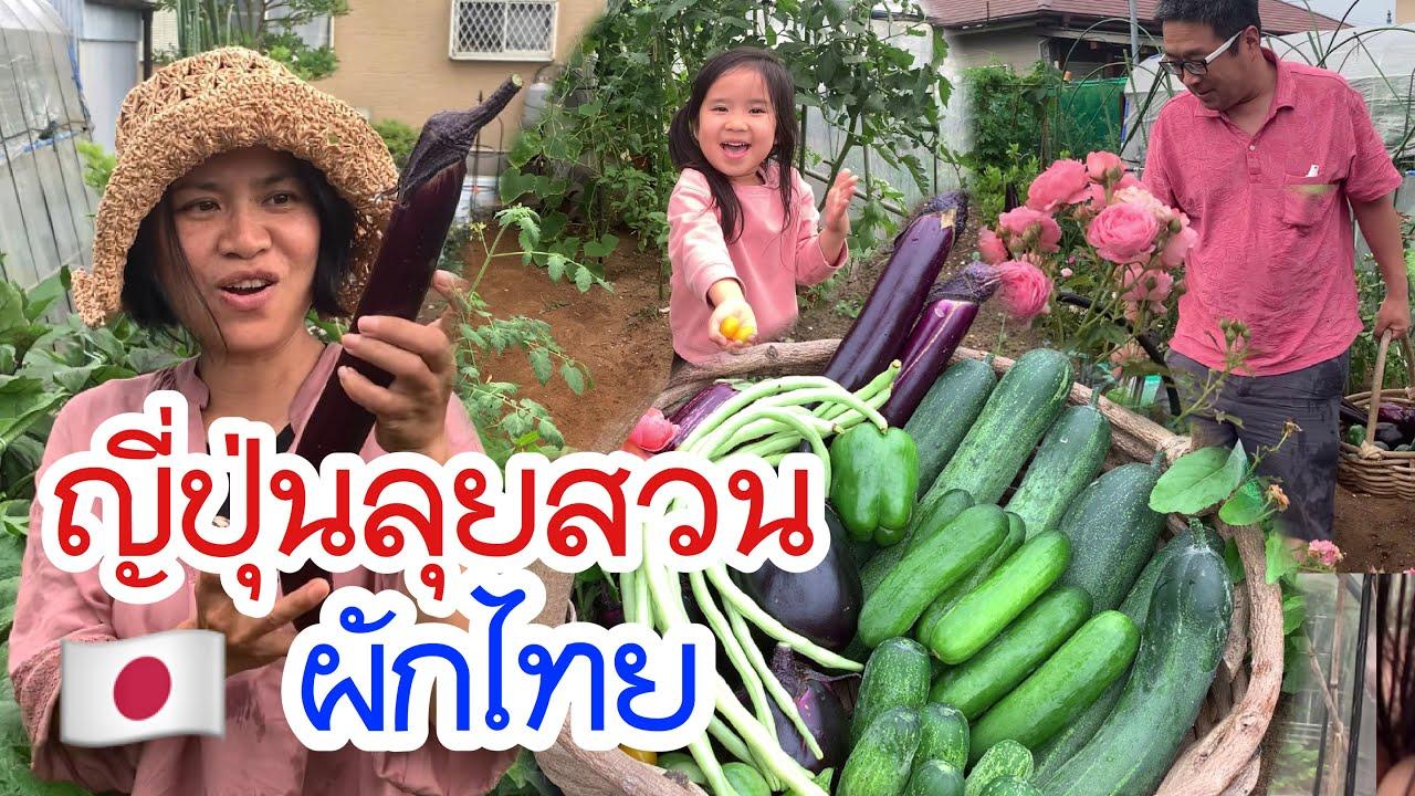 พาหนุ่มญี่ปุ่นลุยสวนผักไทย ผักงามมากดกทุกต้น ใหญ่ยาวมาก