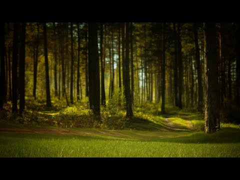 Summer Night in the Forest - Nature Sounds | Nature's White Noise