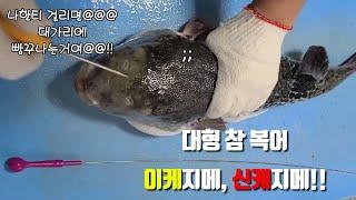 바다먹거리)trim sea food)복어 손질, Tri…