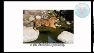 ANGIELSKI ALFABET - Nauka Angielskiego dla Dzieci (FunEnglish - Lekcja I) VIDEO