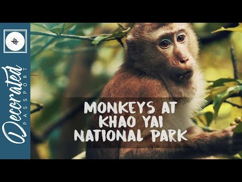 KHAO YAI NATIONAL PARK THAILAND TRAVEL VLOG
