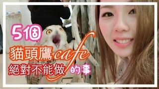 【日本旅行】5個貓頭鷹cafe里絕對不能做的事|Ayu融化了|5つフクロウカフェやっちゃいけないこと