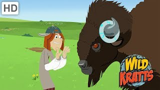 Wild Kratts - The Best Wildlife Experience (1 HOUR!)