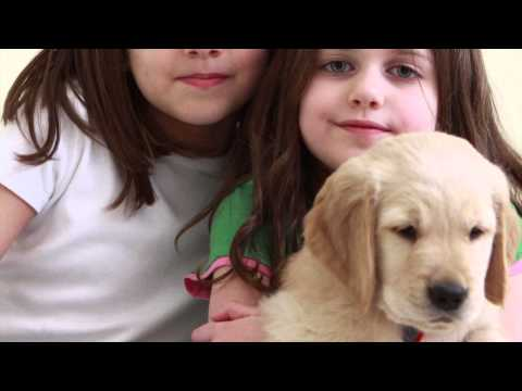 My best friend does not talk. A documentary about friendship for a Golden Retreiver puppy
