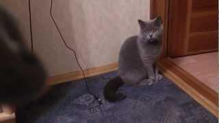 Серый кот и серая мышь