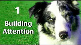 Building Attention: Game 1 Clicker dog training