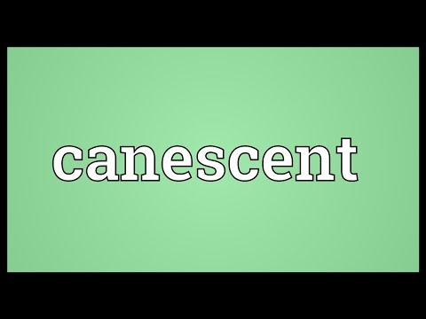 Header of canescent