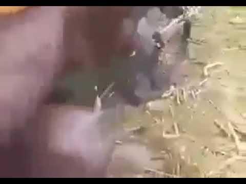 Beginilah perang ala gerilya OPM ( organisasi Papua merdeka)