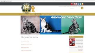 Как зарегистрировать родословную кошки в CFA.
