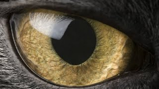 WHAT ANIMAL'S EYESIGHT DO YOU HAVE?