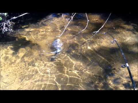 how to fish a popper frog
