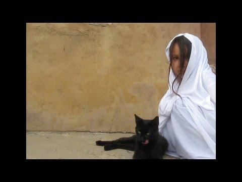 Funny cat ninja bloopers