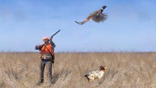 Охота на фазана лучшее видео выстрелов