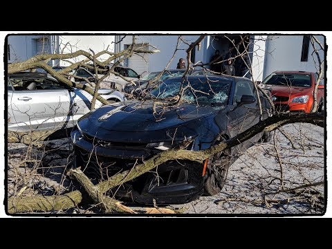 BAD NEWS: Giant Tree Falls and Crushes FOUR Cars at CSP