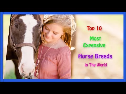 Top 10 Most Expensive Horse Breeds In The World