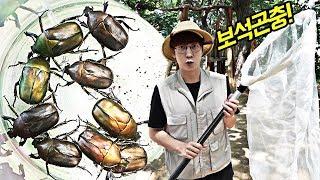 놀이터에서 발견된 반짝반짝 '보석곤충', 놀이터 곤충채집!