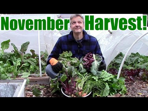 November Vegetable Garden Harvest (Zone 5): Local Food at its Best!