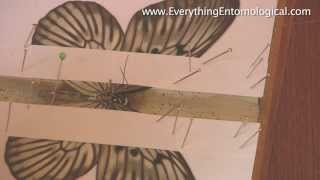 How To Set A Butterfly