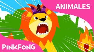 El León | Animales | PINKFONG Canciones Infantiles