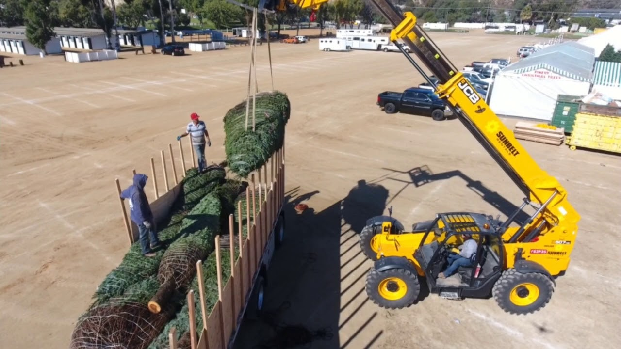 pinery christmas trees wholesale division - Pinery Christmas Trees