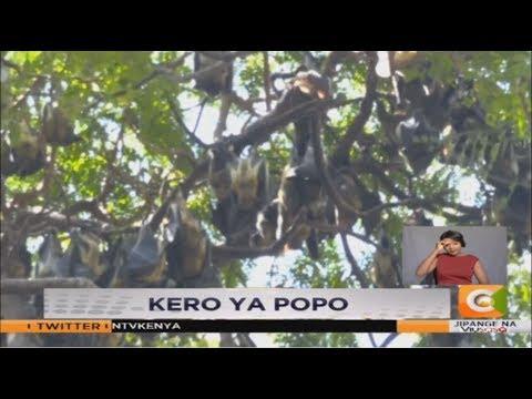 Popo wamevamia bustani ya Uhuru Mombasa